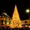 Image of Jack London Square Tree Lighting
