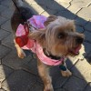 Image of East Bay SPCA Pet Adopt-A-Thon