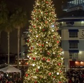 Image of Jack London Square tree lighting for 2018
